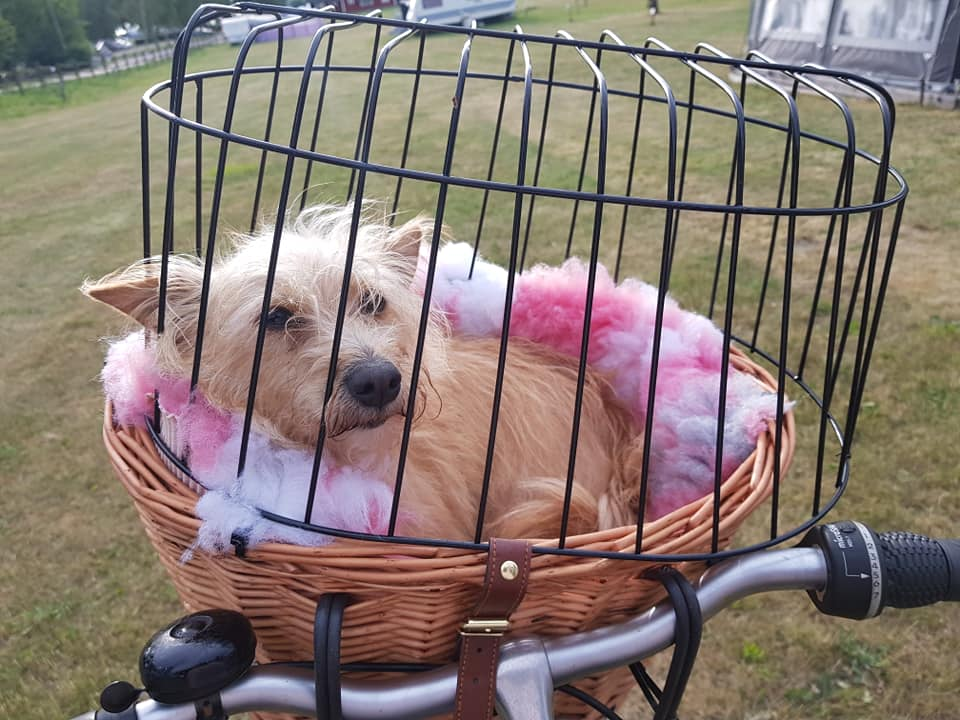 Esther has it cozy in her bicycle basket